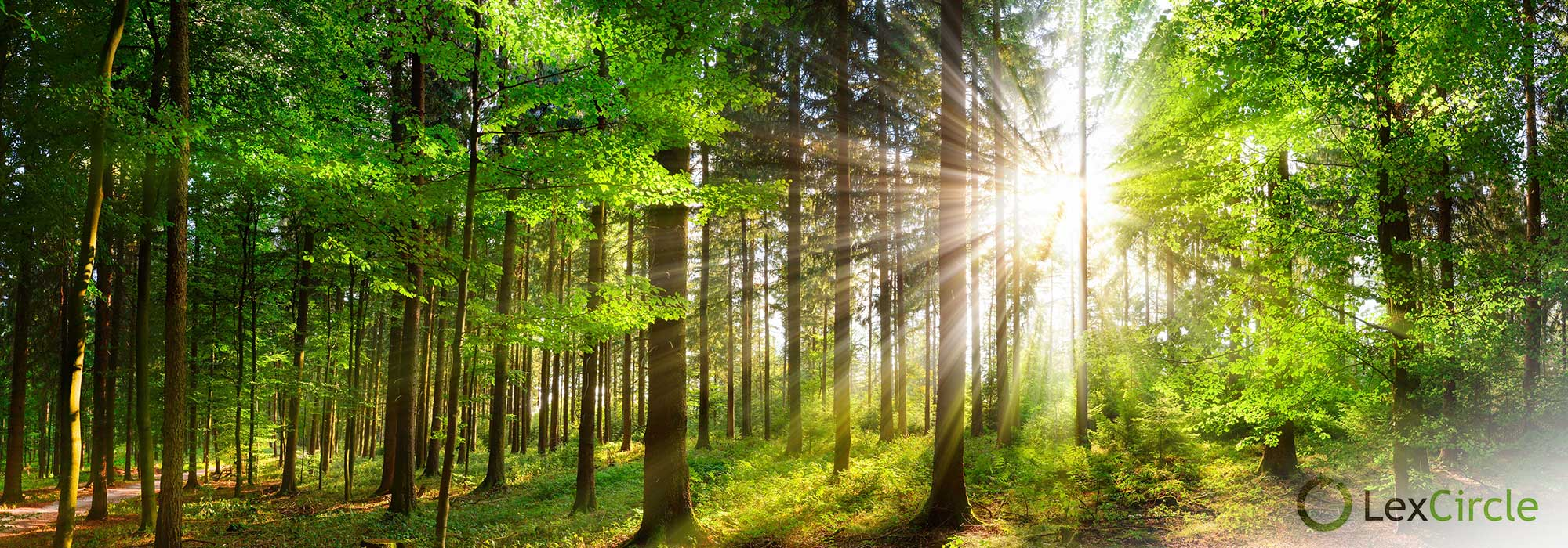 skog og solen skinner